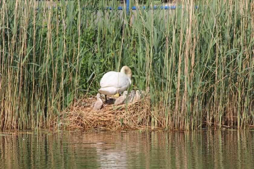 Terug op het nest