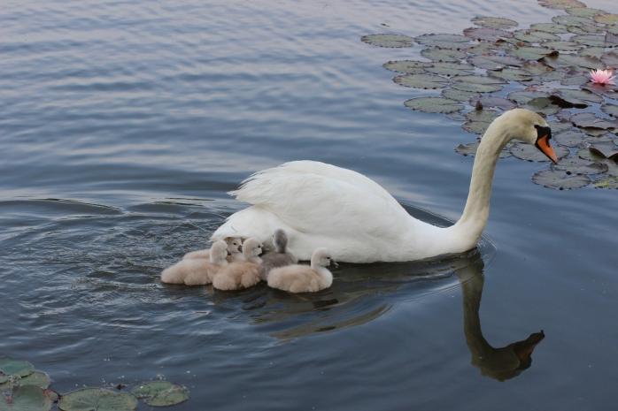 Vlakbij moeder blijven